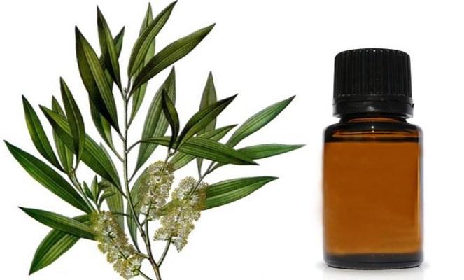 Olio essenziale di Cajeput: benefici e proprietà