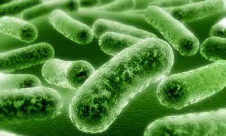 listeria batterio